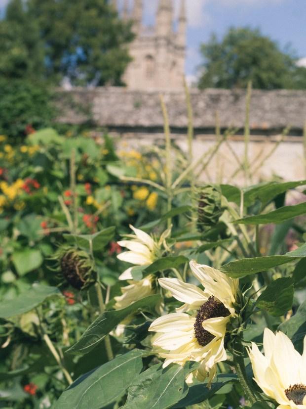 oxford_botanic_garden_8