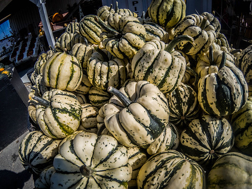 Schuh Farms and Pumpkins-023