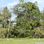 Viajefilos en la Amazonia, Peru 158