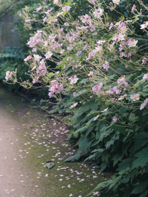 oxford_botanic_garden_10