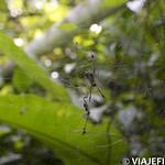 Viajefilos en la Amazonia, Peru 040
