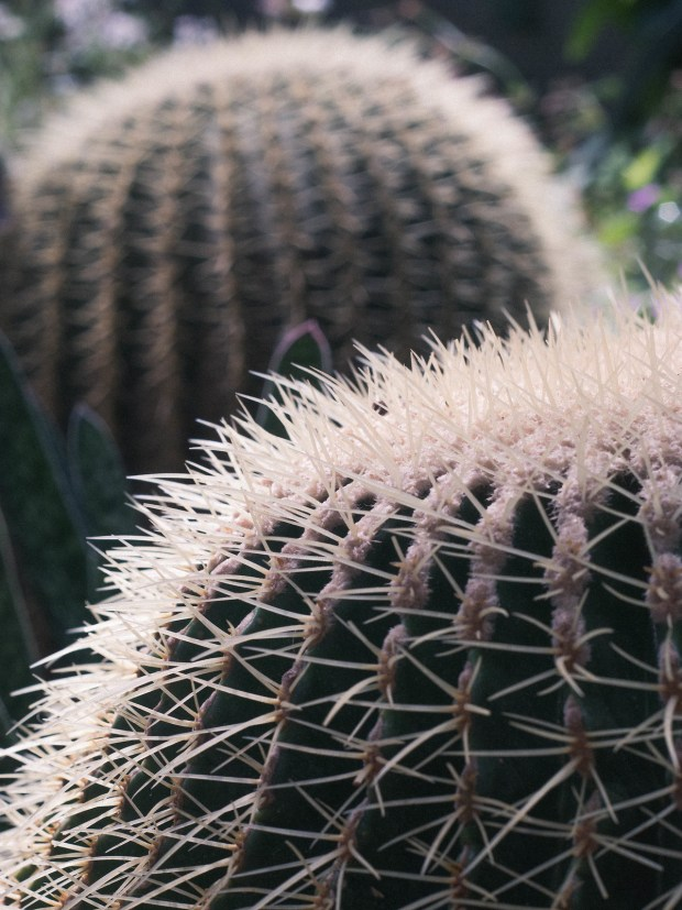 Spiky residents of the Arid House at the Oxford Botanic Garden.