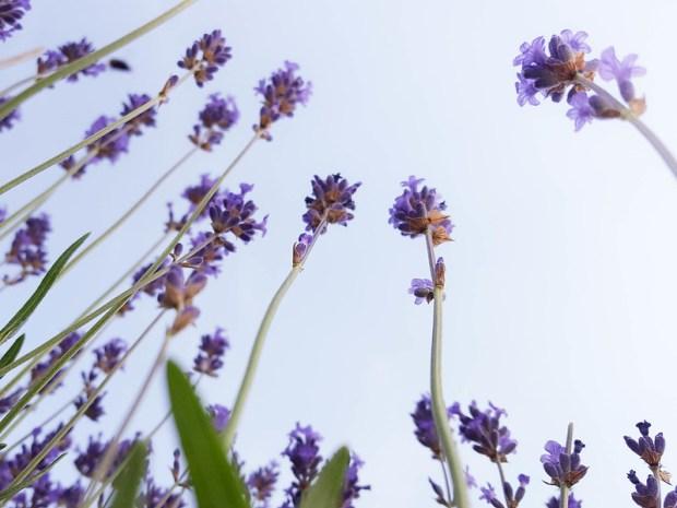 meadows_summer-2