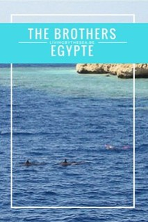 The Brothers - Egypte
