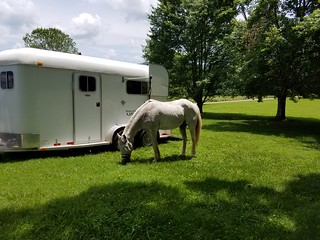 Ultralight Horse Camping Goal