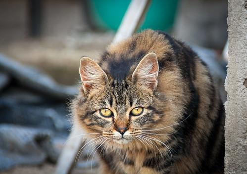 cats latina italy