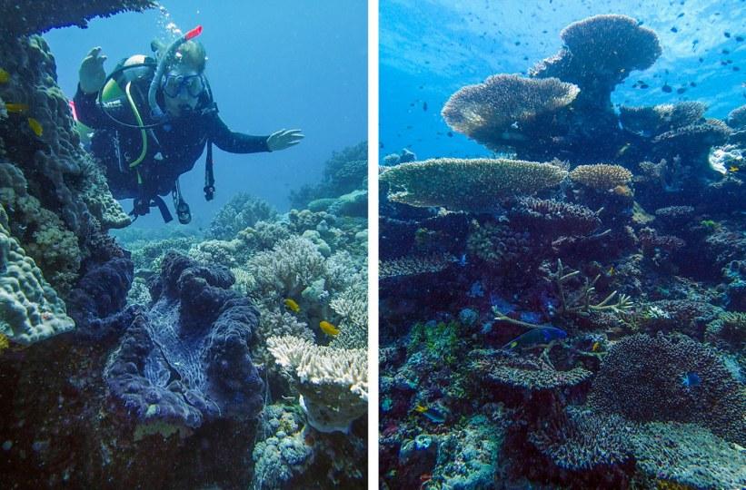 dykning ved Great Barrier Reef, Australien