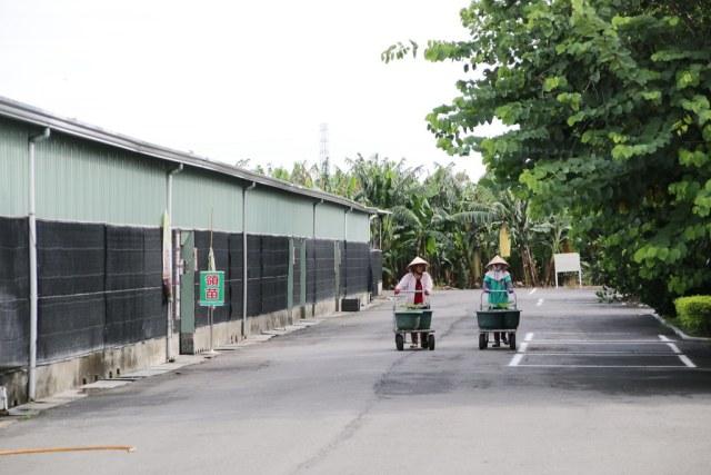 台灣香蕉科技園區 (21)