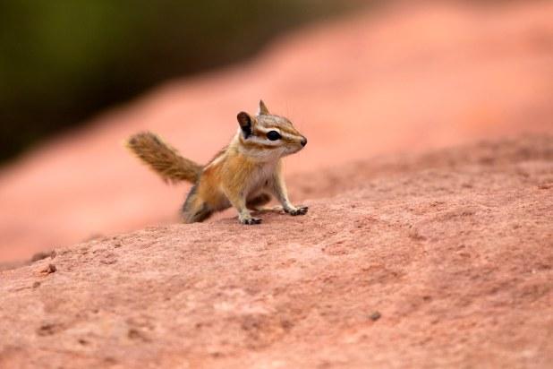Fauna en el Gran Cañón
