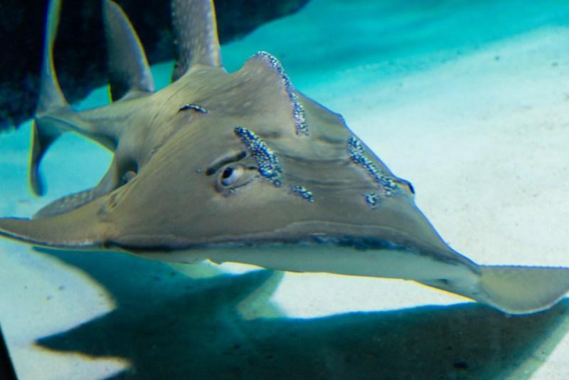 美麗海水族館 / Sharks?