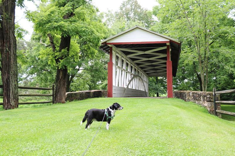 bedford-wood-bridge-8