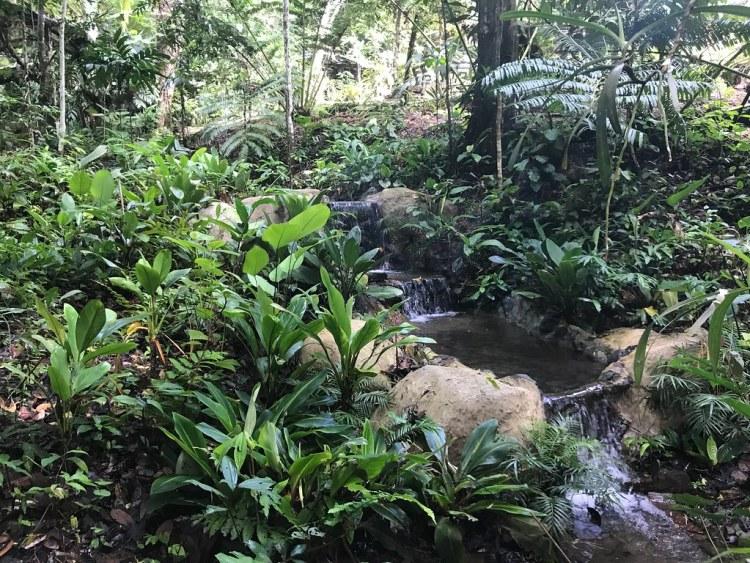 Kinabulu Orchid Garden