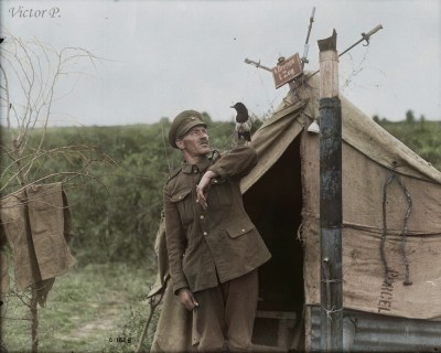 A magpie which has been with a gunner since the Battle of the Somme. July, 1917