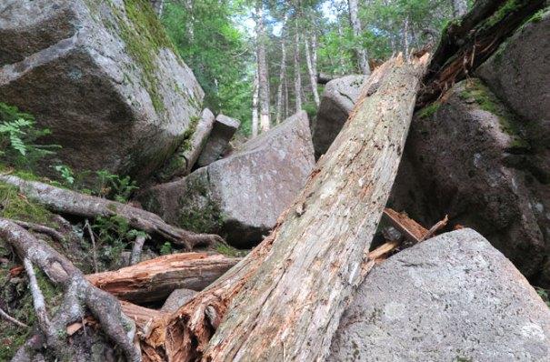 The Owl Trail Rocks