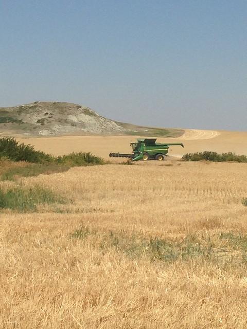 High Plains Harvest -Jill(2017)
