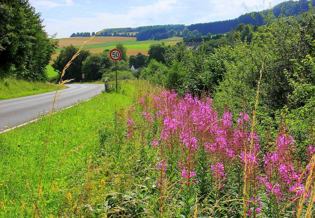 Summer flowers in Moselle Valley