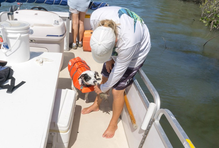 Radcliff Checks Out a Fishing on a Dog-Friendly Fishing Trip with Capt. Rachel Reynolds, R&R Charters, Port Orange, Daytona Beach, FL, July 14, 2017
