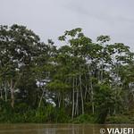 Viajefilos en la Amazonia, Peru 016