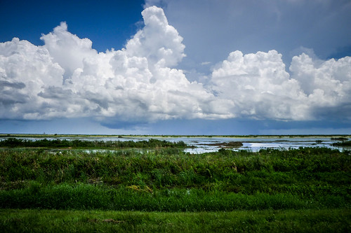 Fellsmere Stick Marsh-32