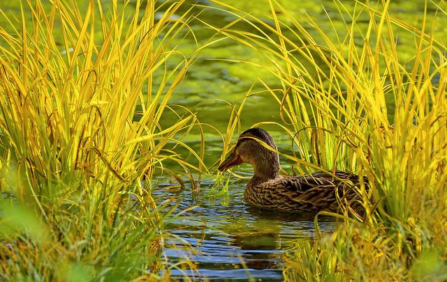 Dissimulée dans les herbes