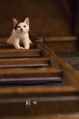 アトリエイエネコ Cat Photographer 36802213006_3dcdb2c20f 1日1猫! 喫茶のんのん(大阪市平野区長吉六反2丁目1−7) 1日1猫!  猫写真 猫 子猫 大阪 写真 保護猫 スマホ カメラ Kitten Cute cat