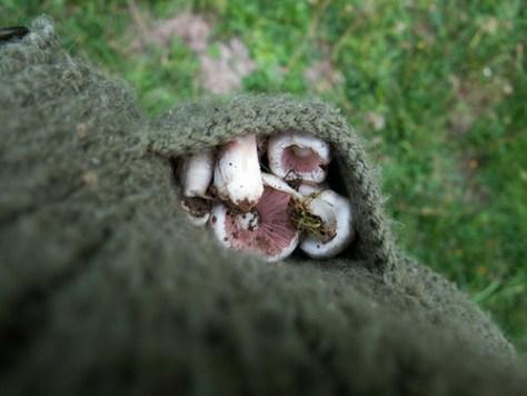 Mushrooms in my pockets
