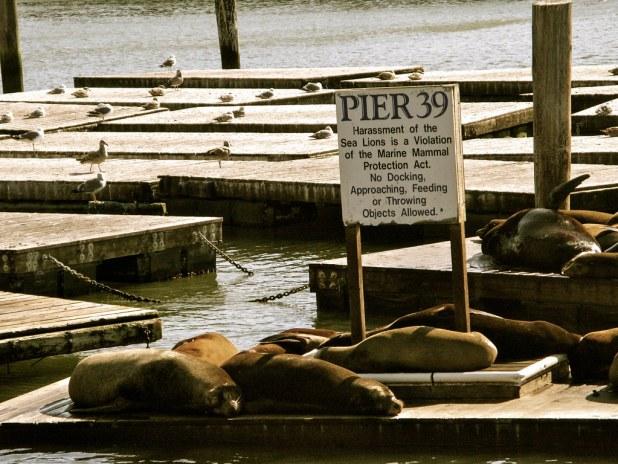 Pier 39 en San Francisco