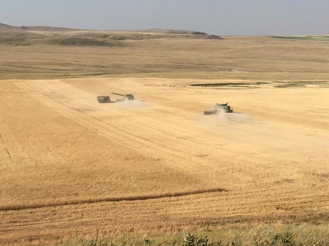 High Plains Harvesting - Mark 2017