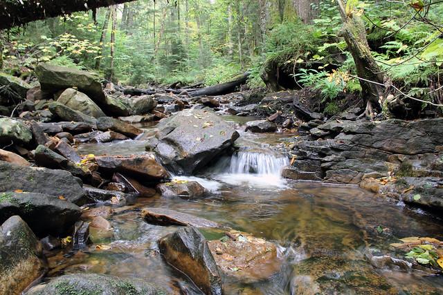 20170916_Cranberry_Wilderness_016