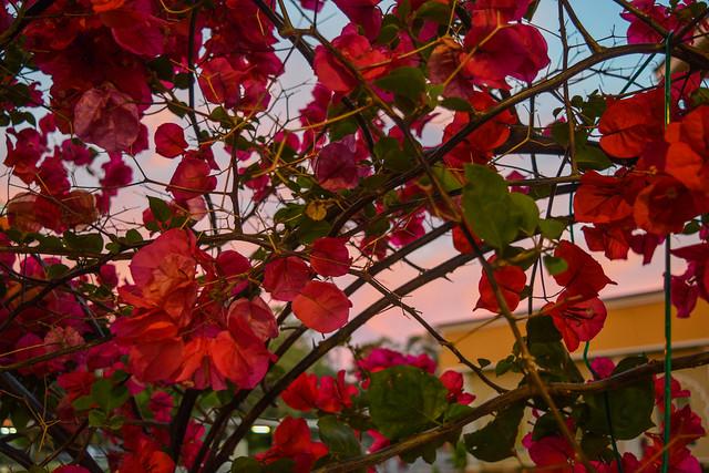 Flowers at Gurdwara Sahib