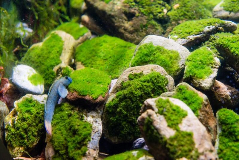 美麗海水族館 / Little Creatures