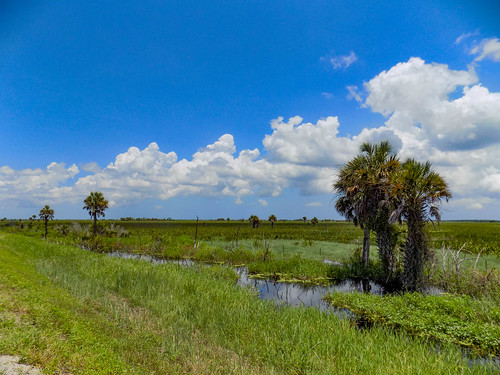 Fellsmere Stick Marsh-5