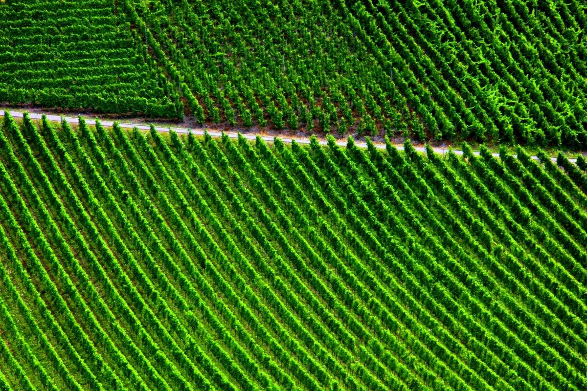 Vineyards around Cochem