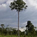 Viajefilos en la Amazonia, Peru 116