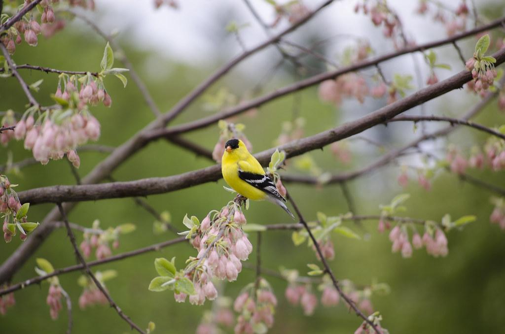 Spring 11