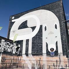 #discovering some #great #streetart #art the First hours in #visitkoeln #urbanCGN #cologne #thisiscologne #koelnergram #köln #ig_cologne #ig_germany #germany #vsco #vscocam #guardiantravelsnaps #guardiancities #wanderlust #travel #koelnergram #instaköln #