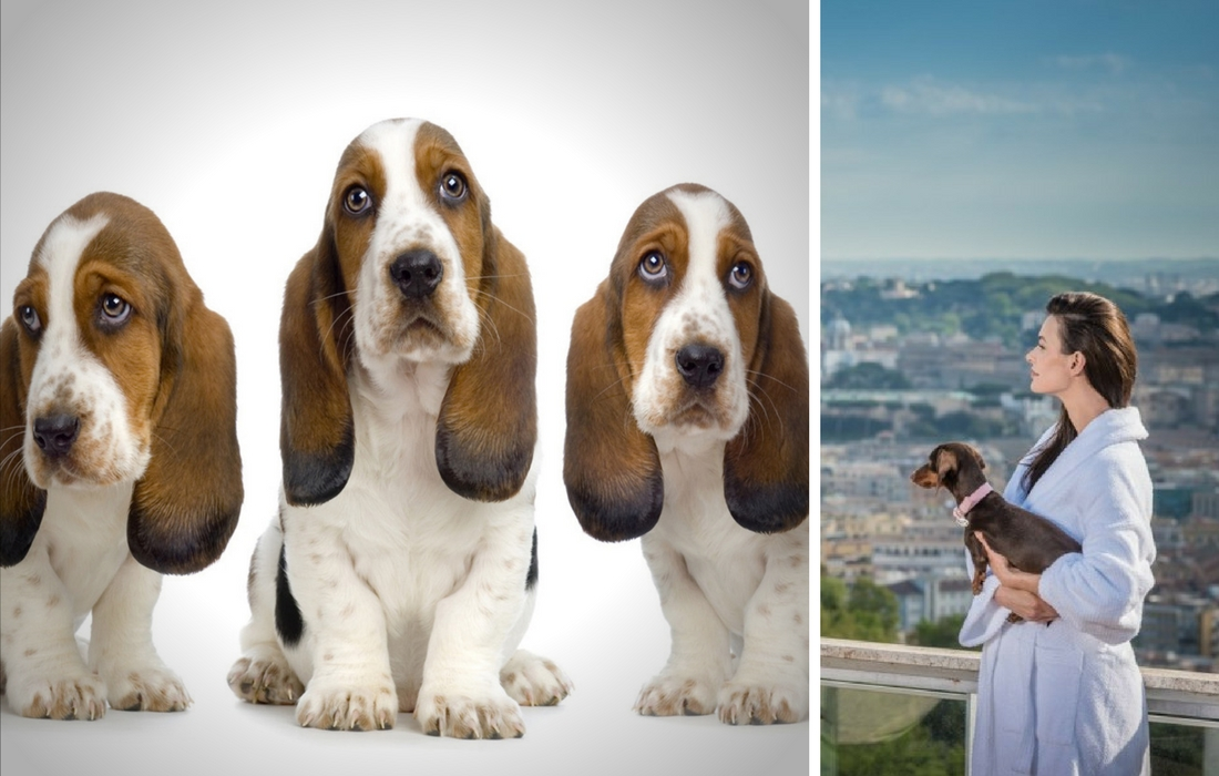 Hotéis e restaurantes que aceitam cães na Itália