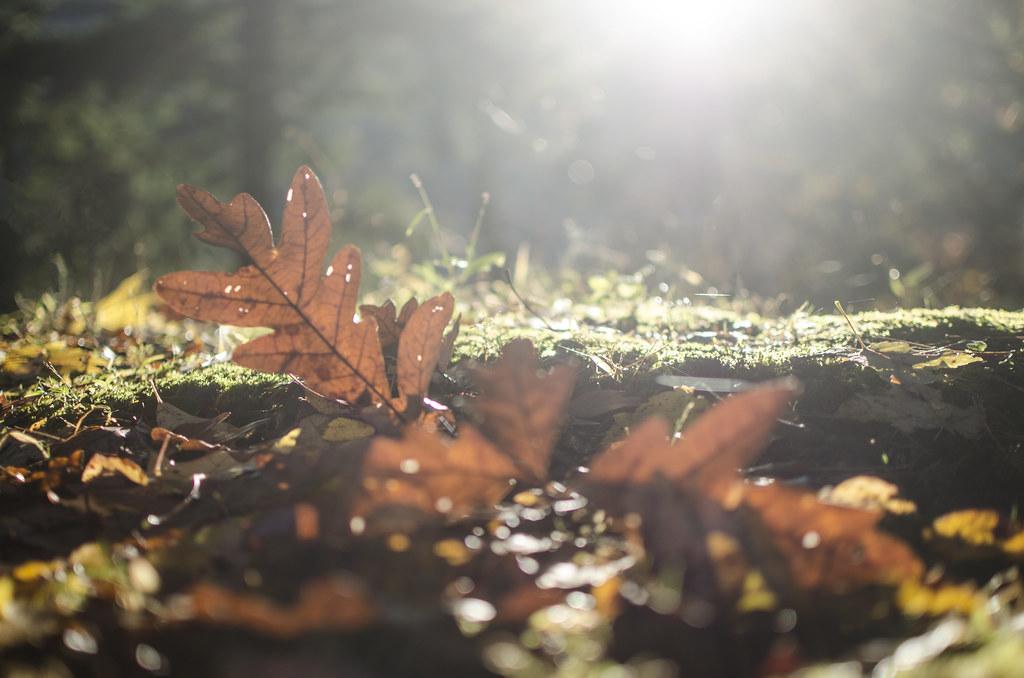 praise the fall 1