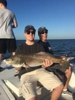 Snook fishing Tampa Bay