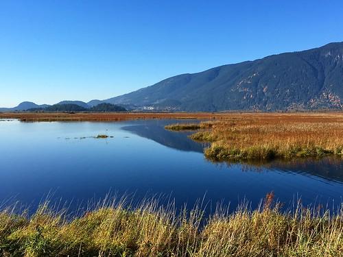 Pitt Lake marsh