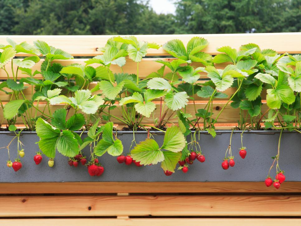 14 Small Space Gardening Tips