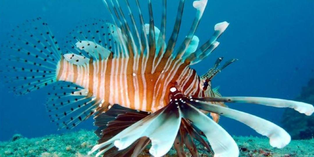 guide-to-scuba-diving-seychelles