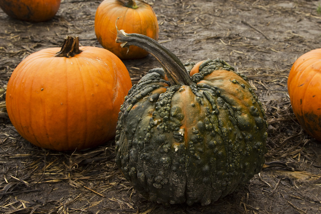 warted pumpkin