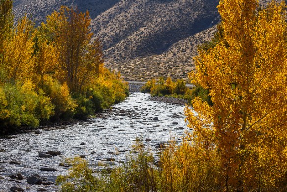 West Walker River in October