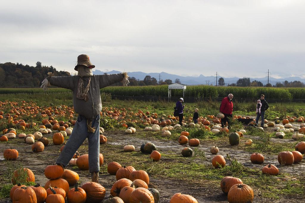 pumpkin patch guardian
