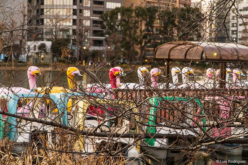 Ueno-Park-129