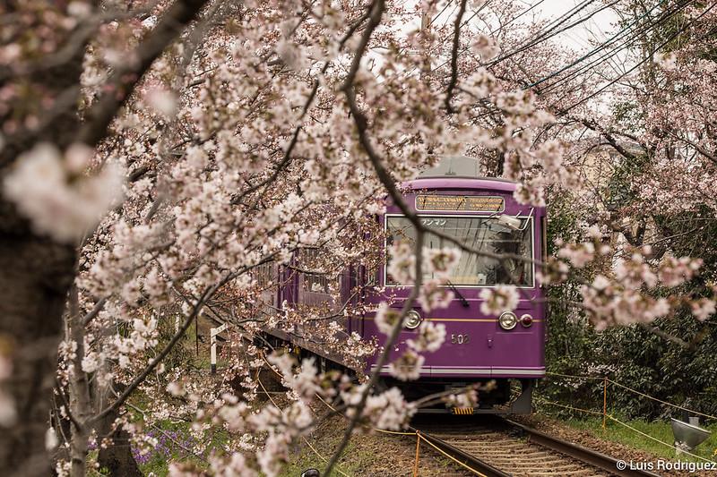 Tunel-Sakura-Kioto-Randen-25