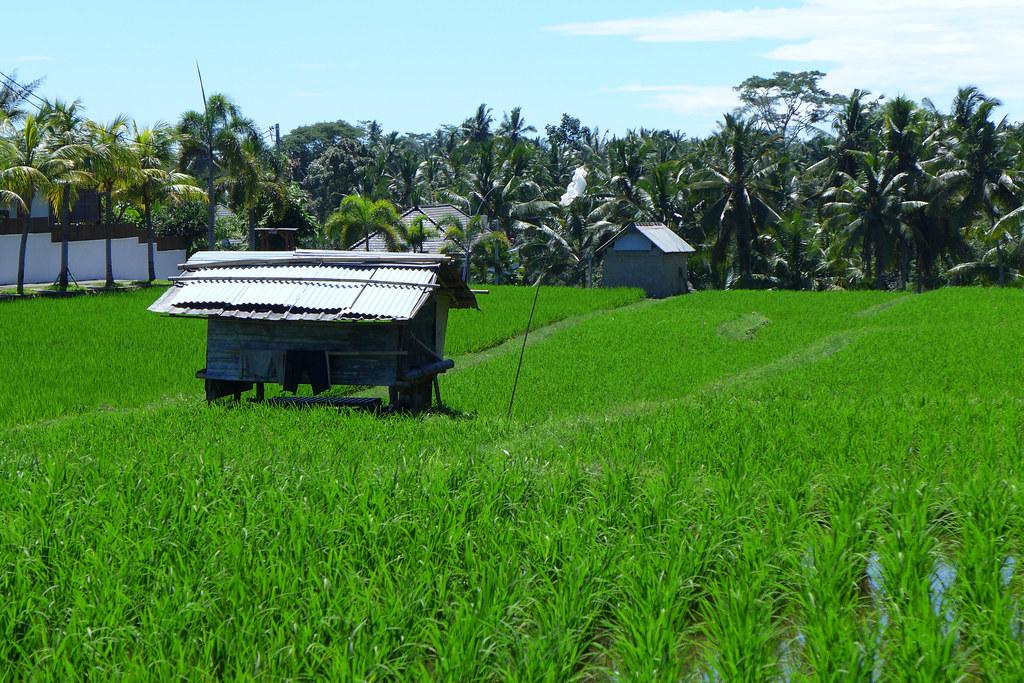 Indonésie - jour 1 - 16 - Ubud