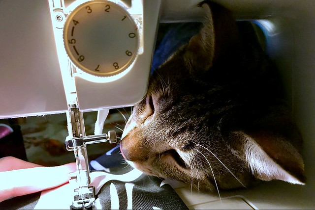 THE SEWING CAT