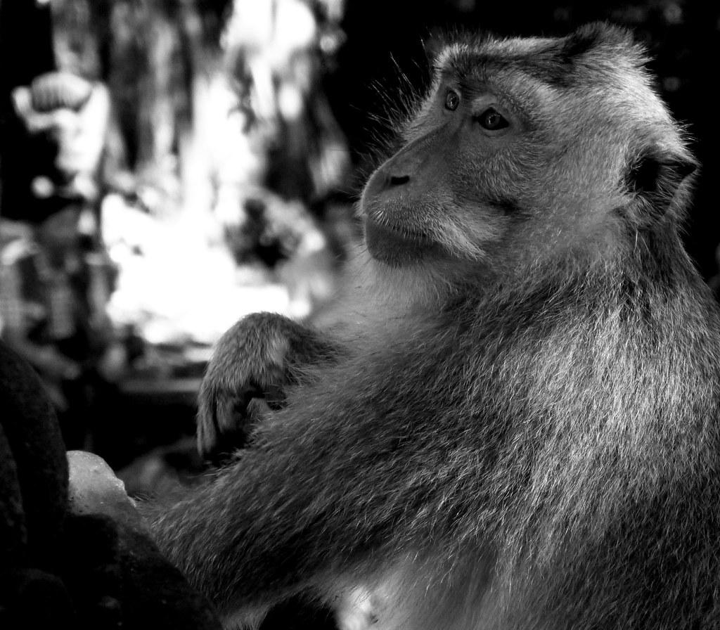 Indonésie - jour 1 - 49 - Ubud - La forêt des singes